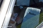 Daily-Datsun-Datsloco-Livermore-121013 (24)